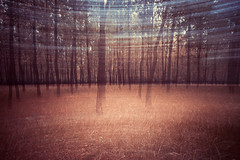 Fake Dream (Picocoon图茧) Tags: dream icm blur motion grove experimental fantasy unreal surreal nature woods confused confusion motiongraphic