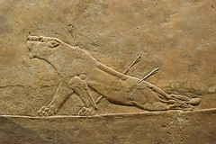 Dying Lioness (meg21210) Tags: assyrian relief nineveh northpalace death agony deathagony realism 645635bc lion lioness animal poignant arrows hunt stone london britishmuseum bm england uk greatbritain king palace royal ancient art ashurbanipal