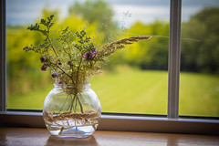 20170715-IMG_1009 (Volmar Oliveira Junior) Tags: flowers arranging nature home green ireland wexford decoration