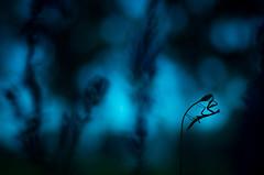 Courbe (olivierpayen40) Tags: mantis religiosa mante religieuse macro macrophotographie macrophotography pentax k5 ii s insectes proxi