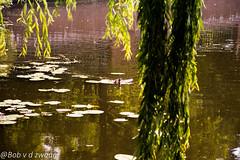 _DSC0141 (bob.vanderzwaag) Tags: duck tree park d5500 18105