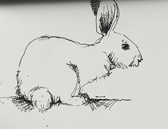 Very quick sketch (annevancamp) Tags: art artwork tekening schets sketch rabbit drawing