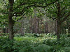 Along the Crab and Winkle Way between Canterbury and Whitstable. Blean Woods - archiving. (favmark1) Tags: crabandwinkleway canterbury whitstable 217 365 365challenge day180 walk