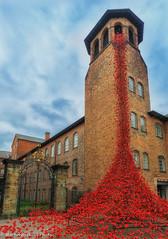 Weeping Window at Derby Silk Mill (martin.baskill) Tags: 2017 derbyshire citycentre poppies silk mill ceramic sculpture tower