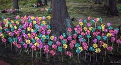 2017 - Japan - Aomori - Unborn Children Pinwheels (Ted's photos - For Me & You) Tags: 2017 aomori cropped japan nikon nikond750 nikonfx tedmcgrath tedsphotos vignetting pinwheels seiryujitemplepark forest