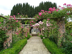 Pergola at Ripley Castle garden (Kniphofia) Tags: pergola roses ripleycastle