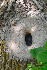 Hole in One (Bucky-D) Tags: hole historicalsite knothole panasoniclumixdmcfz1000 lowerfortgarry tree fz1000 fort clandeboye manitoba canada ca
