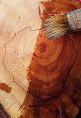 Treating the slice of wood (Terraria) Tags: wood woodwork oil mineraloil