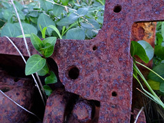 Old and new (jo.elphick) Tags: guerillabaynswaustralia beach rust metal greenleaves