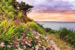 La pointe du roselier Bretagne Cote d'armor (zqk09) Tags: gnc paysage landscape landscapes bretagne france cloud fleur nuage green sun sunset soleil canon 1300d nature flower