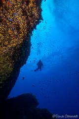 IMG_5999 (davide.clementelli) Tags: scuba underwater underwaterlife diving dive immersione portofino colori colors colore color fishes fish pesci