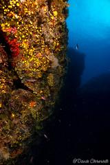 IMG_5972 (davide.clementelli) Tags: scuba underwater underwaterlife diving dive immersione portofino colori colors colore color fishes fish pesci