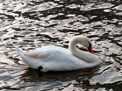To enjoy :) (bybeer) Tags: frankfurt enjoy stork