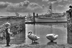 Curiosity (jordangilbert2) Tags: bw ocean seaside poole dorset swans boy boats clouds hdr reflections summer patience light life sea water photo animals blackandwhite day