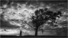 Man & Tree (Nordtegn) Tags: man mann homme baum arbre tree wolken clouds nuages landschaft landscape paysage nb noir blanc noiretblanc bw black blackandwhite blackwhite white sw schwarz schwarzweis schwarzweiss zw zwartwit zwart wit outdoor fotorahmen einfarbig sony zeissvariotessar2470f4zaoss mono monochrom monochrome monochromatic himmel ciel sky