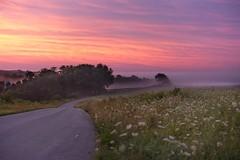 Fog On Kolstad Road (Mulewings~) Tags: sunrise ontheridge redskyatdawn kolstadroad vernoncounty foggymorning fog queenanneslace colors