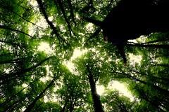 Forest is feeding me (Arnaud Gabriel) Tags: forest fougères fôret france bretagne onf ensp tree arbres