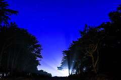follow the light up ahead (pbo31) Tags: bayarea california nikon d810 color july 2017 summer boury pbo31 sanfrancisco black dark night landsend outerrichmonddistrict park nature pacific ocean silhouette blue earth trees forest headlights lincolnpark bluehour high beam