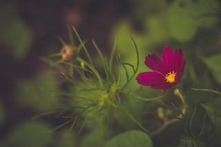 Then a flower ...