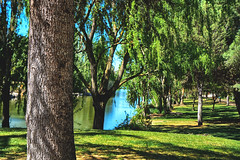 Secret lake (Miguel Angel Prieto Ciudad) Tags: park landscape lake forest hdr water nature sun sunlight guidance tree summer leaf season grass wood sony flora outdoors trunk secret scenery environment scenic lush sonyalpha no person fair weather móstoles sonyalphadslr