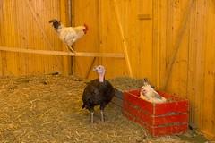 GoUrban_170727_Farm_011