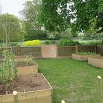 Vegetable gardens at Glastonbury Abbey thumbnail