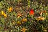 WB1A8032-47 (Lauren Philippe) Tags: cratèredolomieu iledelaréunion laréunion pitondelafournaise archipeldemascareignes randonnée trecking volcans sainterose saintbenoit réunion re