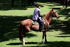 Horse (Strocchi) Tags: 8castelliperunpalio roccadellecaminate horse cavallo 50500mm sigma canon eos6d