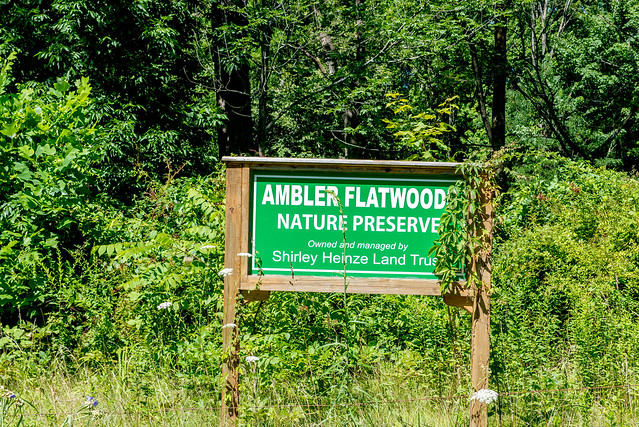 Ambler Flatwoods Nature Preserve - July 25, 2017