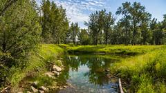 Beaver Pond (kensparksphoto) Tags: fishcreekpark alberta calgary pond green verdant lush beaver july morning