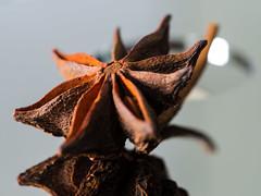 Star Anise (AnouarDZ) Tags: food staranise olympus em10 50mm ingredients anice texture bokeh