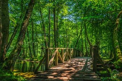 Vrelo Bosne (Todorovic Srecko) Tags: vrelo bosne sarajevo bosnia creek bridge nature wellhead ngc bosna hercegovina