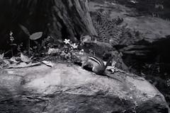 Dioramas (Touristos) Tags: dioramas palais de tokyo art contemporain anselmkiefer armandmorin arnogisinger arthuraugustjansson caofei carlakeley caterinadejulianis charlesmatton claudeandréférigoule dianefox duanehanson dulcepinzón edwardhart emmanuelfrémiet erichböttcher fionatan fritzlaube gmsalgé georgeshenririvière gerritschouten giovannid'enrico hiroshisugimoto ignaziologiudice isagenzken jacquesbouisset jeanpaulfavand jeffwall joanfontcuberta josephcornell julesterrier kentmonkman lorenzomosca louisdaguerre marcelleackein markdion mathieumercier palaisdetokyo paris patrickjacobs peterspicer philippechancel pierreleguillon pierricksorin richardbaquié richardbarnes robertgober ronanjimsévellec rowlandward ryangander sammybaloji tatianatrouvé tomwesselmann walterpotter williamrobinsonleigh artcontemporain