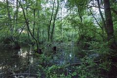 Danube delta - Romania (wietsej) Tags: danube delta romania sony a6000 sel1018 1018 ultima frontiera wildpix donau trees water