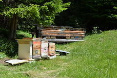 Val Gardena Active visita ad un alveare/Besichtigung eines Bienenstocks (Val Gardena - Gröden Marketing) Tags: bienen imker ape api alveare bienenstock valgardena gröden südtirol italien altoadige trentinosüdtirol miele honig wolkenstein selvavalgardena hive bee