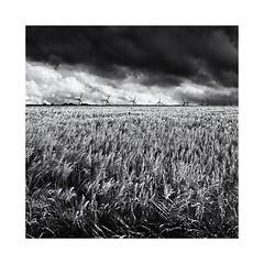 Barley Breezee (Missy Jussy) Tags: barley breeze windfarm wind sky clouds moodylandscape moody yorkshire mono monochrome blackwhite bw blackandwhite canon canon5dmarkll 50mm ef50mmf18ll canon50mm fantastic50mm