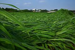20170719_033_2 (まさちゃん) Tags: 風 空 雲