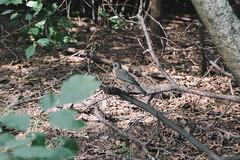 20170722-IMG_9889 (franciscoruela) Tags: centralpark nature nyc vsco wildlife