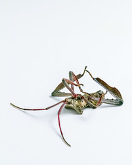 sigma 105mm leaf footed  bug-2 (chrisfergusonworks) Tags: sigma sigmafoveon foveon sdqh sdquattro sigmasdquattroh chrisferguson sigma105mmf28macro santaclausindiana indiana