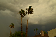 DSC_7555 (georgerocheleau) Tags: mesa arizona storm clouds rain lightning therebeastormabrewin