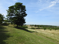 Trees (Artybee) Tags: nationaltrust northamptonshire lyveden new bield unfinished elizabethan grade 1 listed