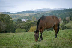 Feeding nature (Mariano Colombotto) Tags: raco tucuman argentina landscape paisaje nature naturaleza nikon photographer photography animal horse caballo mammal autofocus travel ngc naturebynikon infinitexposure