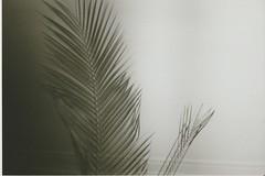 1 (Hi I'm Britt) Tags: film 35mm 35mmfilm kodak kodak400tx kodak400 blackandwhite istillshootfilm shootfilmstaybroke nikon nikonaf240sv filmphotography filmisnotdead filmsnotdead nature flash buildings trees sky nighttime palmtrees neon scans abbotsford abbotsfordconvent melbourne victoria australia cbd