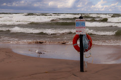 Rip Currents (stevef325) Tags: approved lake michigan lakemichigan rip current waves rough beach seagull sandsurf emergency life