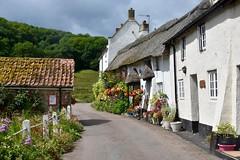 Idyllic Devon (Nige H (Thanks for 20m views)) Tags: nature landscape village branscombe england devon summer cottages thatchedcottage idyllicdevon idyllic