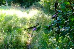 Fleur (alainlecroquant) Tags: coteauxdesaintpédebigorre saintpédebigorre coteaux abbatiale palombière randonnée hautespyrénées vaches lavoir ferme cheval vtt fleurs