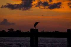 Scouting... (J. Love Photography) Tags: bay seaside dock clouds water gulf gulfofmexico d5300 nikon sky sunset outdoors seagull bird portbolivar texas