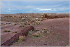 225 million year old trees (Cliff Hall) Tags: arizona landscape petrifiedforestnationalpark holbrook unitedstates