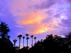 """Sunsets are proof that no matter what happens, everyday day can end beautifully"" - Kristen Butler 🌅 #sunset #palmtrees #sky #adifferentpointofview (_adifferentpointofview_) Tags: sunset palmtrees sky adifferentpointofview"