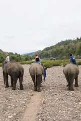 Have a break have a kitkat (HansPermana) Tags: luangprabang laos elephantvillage elephants nature sanctuary relax holiday cute smart adventure